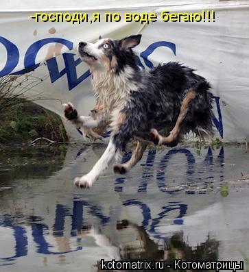 Котоматрица: -господи,я по воде бегаю!!!