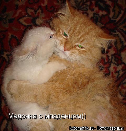 Котоматрица: Мадонна с младенцем))