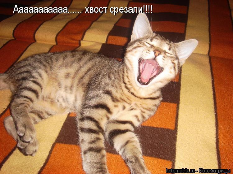 Котоматрица: Ааааааааааа...... хвост срезали!!!!