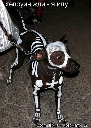 Котоматрица: хелоуин жди - я иду!!!