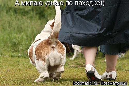 Котоматрица: А милаю узнаю по паходке))
