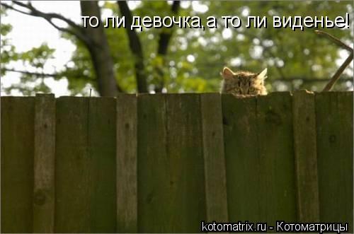 Котоматрица: то ли девочка,а то ли виденье!