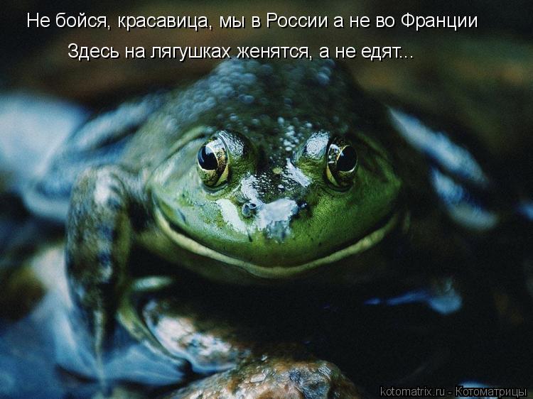 Котоматрица: Не бойся, красавица, мы в России а не во Франции Здесь на лягушках женятся, а не едят...