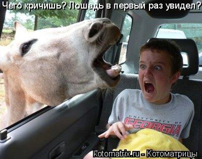 Котоматрица: Чего кричишь? Лошадь в первый раз увидел?