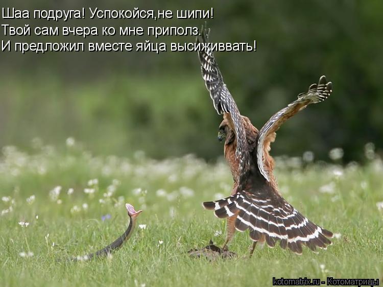 Котоматрица: Шаа подруга! Успокойся,не шипи! Твой сам вчера ко мне приполз. И предложил вместе яйца высиживвать!
