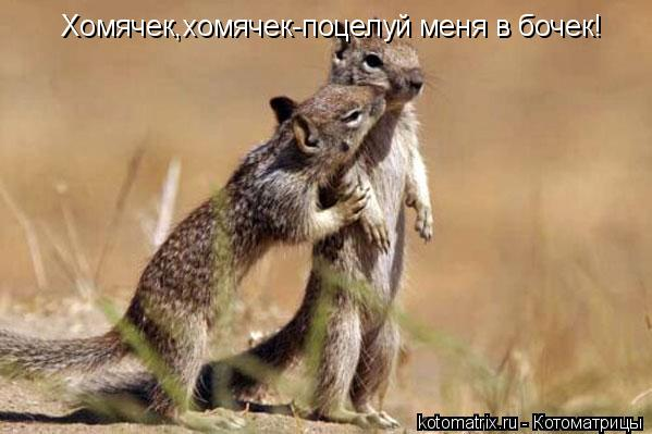 Котоматрица: Хомячек,хомячек-поцелуй меня в бочек!