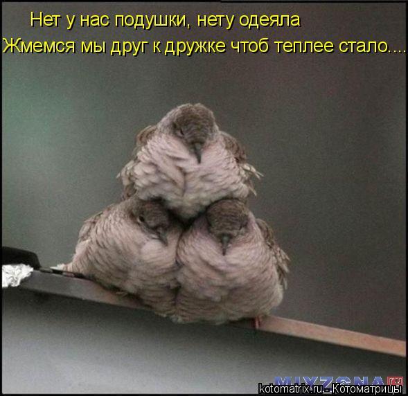 Котоматрица: Нет у нас подушки, нету одеяла Жмемся мы друг к дружке чтоб теплее стало....