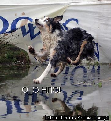 Котоматрица: О_О НЛО!