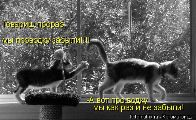 Котоматрица: мы проводку забыли!!!! Товарищ прораб, -А вот про водку  мы как раз и не забыли!