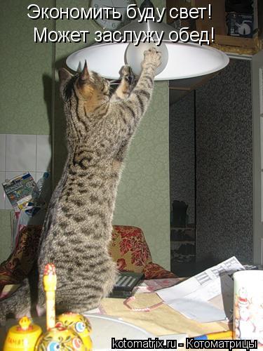 Котоматрица: Экономить буду свет! Может заслужу обед!