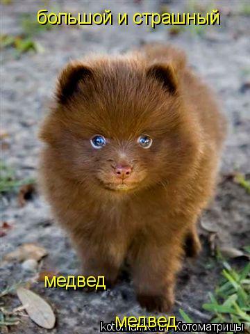 Котоматрица: большой и страшный медвед медвед