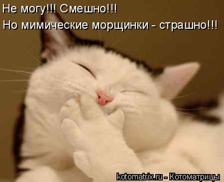 Котоматрица: Не могу!!! Смешно!!!  Но мимические морщинки - страшно!!!