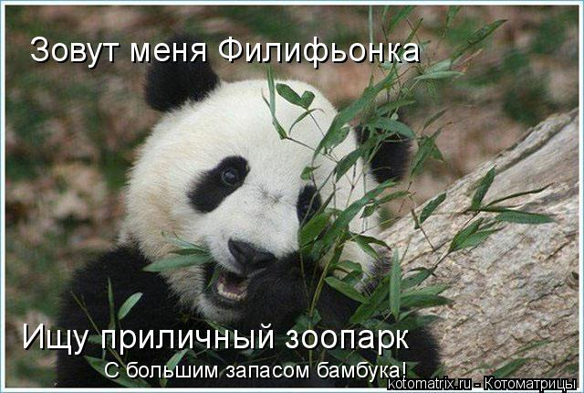 Котоматрица: Зовут меня Филифьонка Ищу приличный зоопарк С большим запасом бамбука!