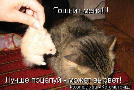 Котоматрица: Тошнит меня!!! Лучше поцелуй - может вырвет!