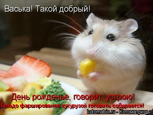 Котоматрица: День рожденье, говорит, устрою! Васька! Такой добрый! Блюдо фаршированое кукурузой готовить собирается!