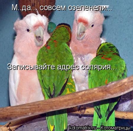 Котоматрица: М..да... совсем озеленели... Записывайте адрес солярия...