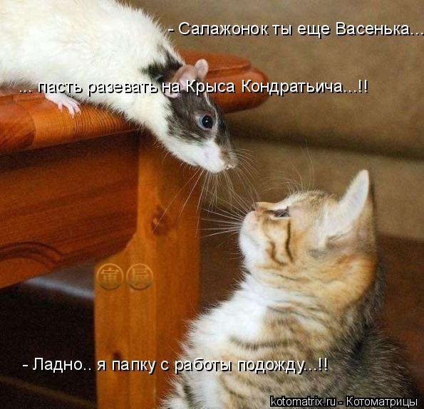 Котоматрица: - Салажонок ты еще Васенька... ... пасть разевать на Крыса Кондратьича...!! - Ладно.. я папку с работы подожду...!!