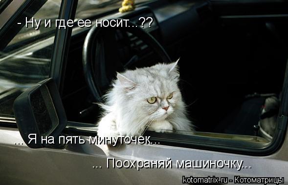 Котоматрица: - Ну и где ее носит...?? ... Я на пять минуточек... ... Поохраняй машиночку...