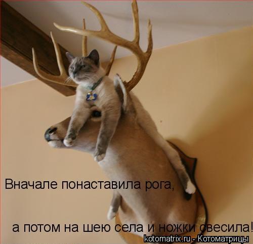 Котоматрица: Вначале понаставила рога, а потом на шею села и ножки свесила!!!