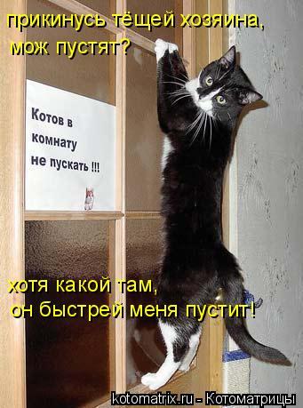 Котоматрица: прикинусь тёщей хозяина, мож пустят? хотя какой там, он быстрей меня пустит!