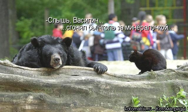 Котоматрица: -Слышь, Василич... ...сгонял бы чтоль за минералочкой...