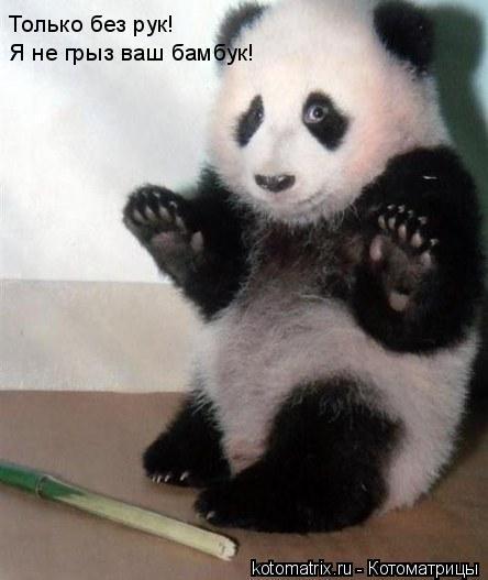 Котоматрица: Только без рук!  Я не грыз ваш бамбук!