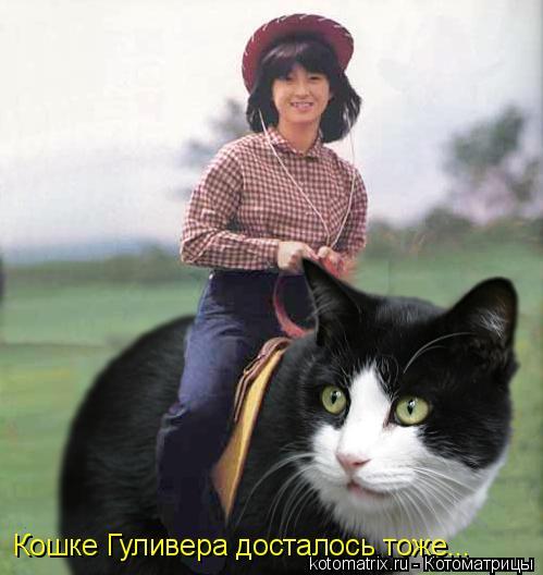 Котоматрица: Кошке Гуливера досталось тоже...