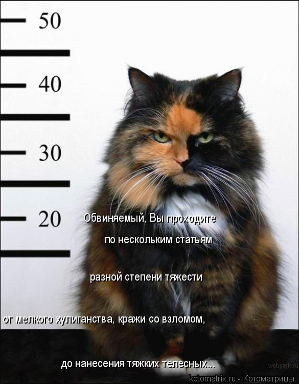 Котоматрица: Обвиняемый, Вы проходите  по нескольким статьям разной степени тяжести от мелкого хулиганства, кражи со взломом, до нанесения тяжких телес