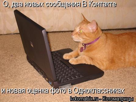 Котоматрица: О, два новых сообщения В Контакте и новая оценка фото в Одноклассниках