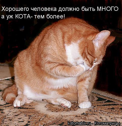 Котоматрица: Хорошего человека должно быть МНОГО а уж КОТА- тем более!