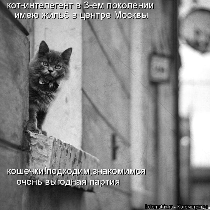 Котоматрица: кот-интелегент в 3-ем поколении имею жильё в центре Москвы кошечки!подходим,знакомимся очень выгодная партия