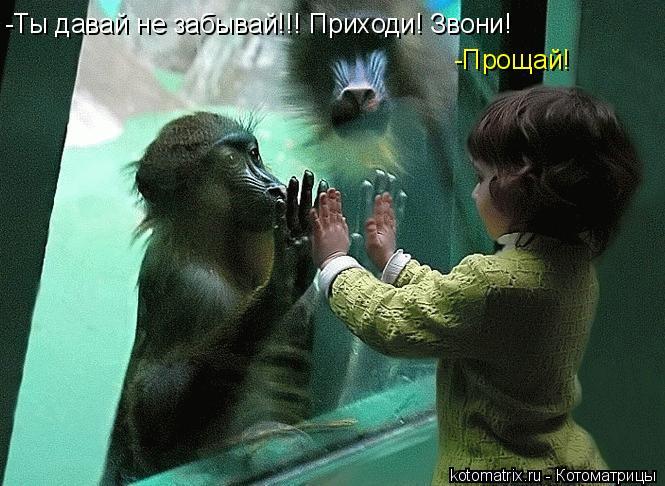 Котоматрица: -Ты давай не забывай!!! Приходи! Звони! -Прощай!