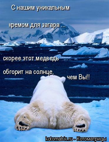 Котоматрица: С нашим уникальным  кремом для загара ... скорее этот медведь   обгорит на солнце, чем Вы!!