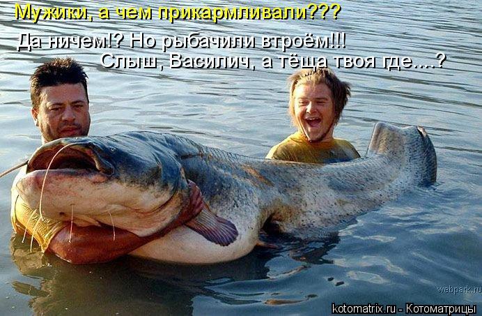 Котоматрица: Да ничем!? Но рыбачили втроём!!! Слыш, Василич, а тёща твоя где....? Мужики, а чем прикармливали???