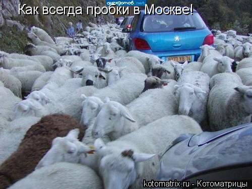 Котоматрица: Как всегда пробки в Москве!