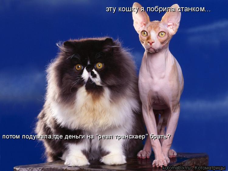 """Котоматрица: эту кошку я побрила станком... потом подумала,где деньги на """"реал трансхаер"""" брать?"""