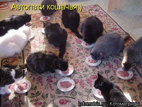 Котоматрица: Автопати кошачья:)