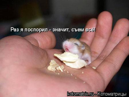 Котоматрица: Раз я поспорил - значит, съем всё!
