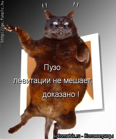 Котоматрица: Пузо  левитации не мешает,  доказано ! ! ! ! !