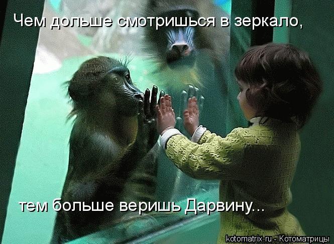 Котоматрица: Чем дольше смотришься в зеркало, тем больше веришь Дарвину...