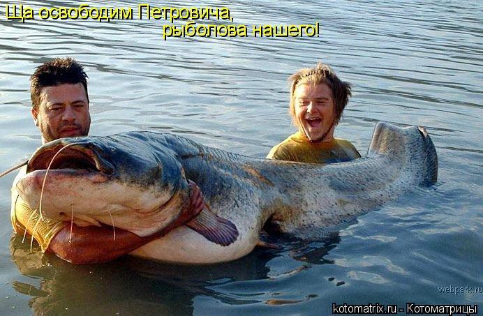 Котоматрица: Ща освободим Петровича,  рыболова нашего!