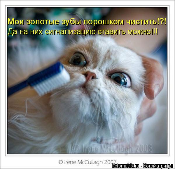Котоматрица: Мои золотые зубы порошком чистить!?! Да на них сигнализацию ставить можно!!!