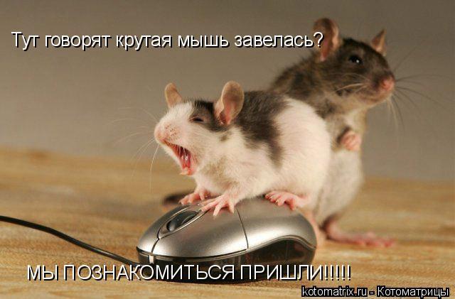 Котоматрица: Тут говорят крутая мышь завелась? МЫ ПОЗНАКОМИТЬСЯ ПРИШЛИ!!!!!