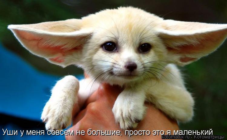 Котоматрица: Уши у меня совсем не большие, просто это я маленький