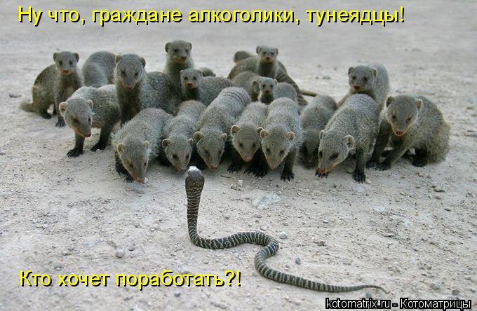 Котоматрица: Ну что, граждане алкоголики, тунеядцы! Кто хочет поработать?!