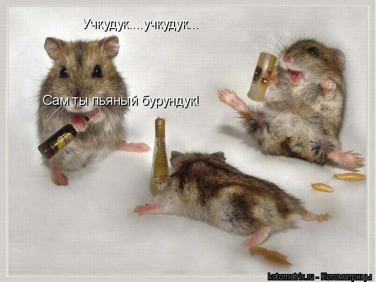 Котоматрица: Учкудук....учкудук... Сам ты пьяный бурундук!