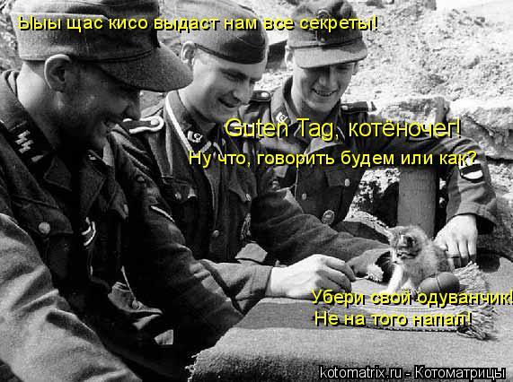 Котоматрица: Guten Tag, котёночег!  Ну что, говорить будем или как?  Убери свой одуванчик! Не на того напал! Ыыы щас кисо выдаст нам все секреты!