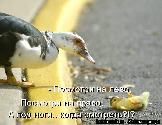 Котоматрица: - Посмотри на лево,  Посмотри на право,  А под ноги...когда смотреть?!?