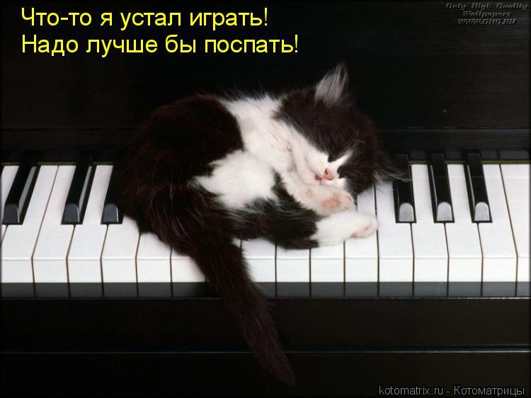 Котоматрица: Что-то я устал играть! Надо лучше бы поспать!