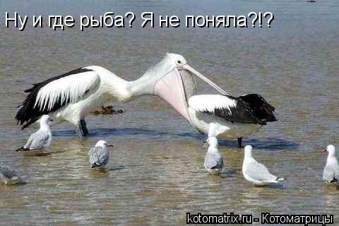 Котоматрица: Ну и где рыба? Я не поняла?!?